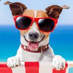 gratis Hundefutter bestellen