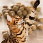 kostenlose Futterprobe für Hunde und Katzen