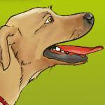 kostenlose Probe dinner for dogs