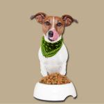 Hundefutter zur Probe