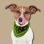 Hundefutter von Schecker kostenlos