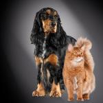 Katzen- und Hundeernährungskonzept