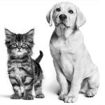 Ausdrucke Hund oder Katze kostenlos