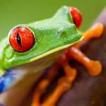 gewinne eine Costa Rica Reise