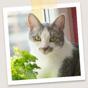 Katzenfutterproben gratis